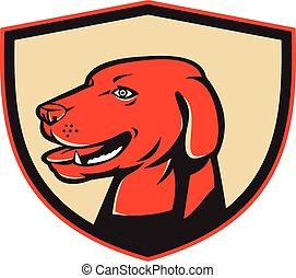 retro, kopf, apportierhund, labrador, schutzschirm, goldenes, hund