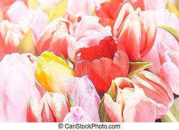 retro, lente, achtergrond, van, fris, tulpen