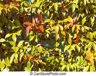 Retro look Green leaves