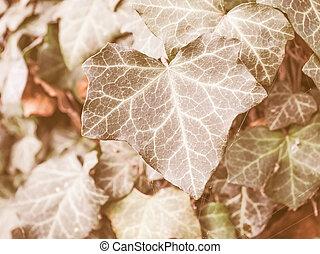 Retro looking Ivy leaves