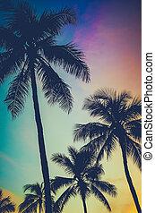 retro, ocaso, árboles de palma