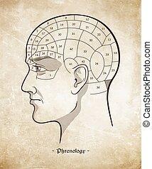Retro pseudoscience poster Phrenology