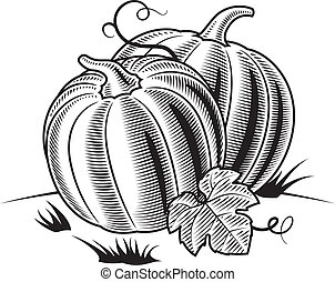 Retro pumpkins in woodcut style. Black and white vector illustration.