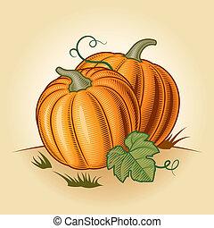 Retro pumpkins in woodcut style. Vector illustration.