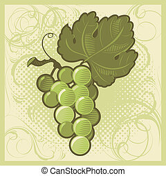 Retro-styled green grape bunch. Vector illustration.