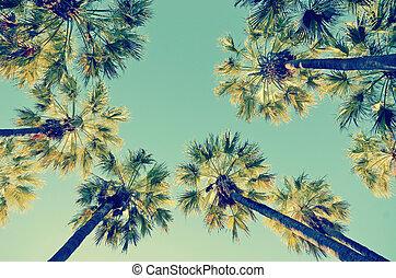 Retro summer palm tree canopy