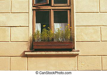 Retro window with flowers