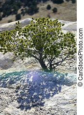 retroilluminato, albero