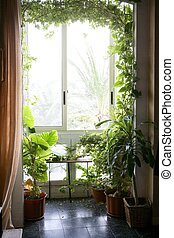 retroilluminato, in, uno, casa, stanza, con, piante