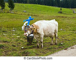 Return of livestock from high alpine summer pastures in Tyrolia in Austria