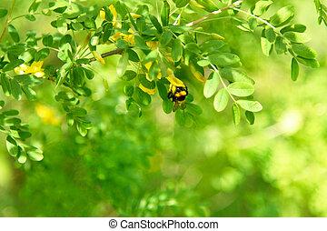 reunião, néctar, ensolarado, árvore, abelha, ramo, acácia, dia, jardim
