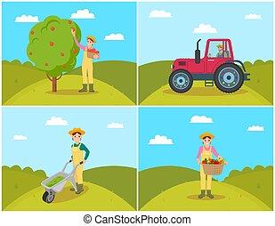 reunión, conjunto, ilustración, vector, manzanas, granjero