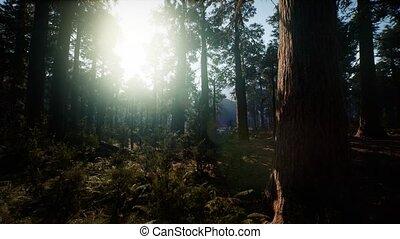reus, californië, bomen, nationale, summertime, sequoia, ...