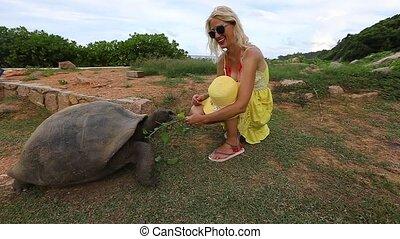 reus, vrouw, schildpad