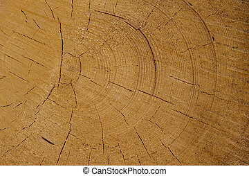 reversed-cut tree trunks - trees in a forest have been recut...