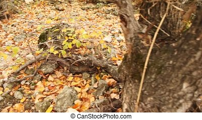 review of roots of trees, stones and fallen down leaves -...