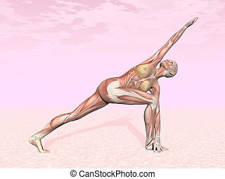 Revolved side angle yoga pose for woman with muscle visible...