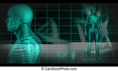 Revolving human skeleton figures on black DNA helix...
