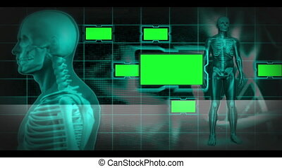 Revolving human skeleton with copy spaces on black and blue...