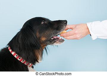 Reward from the veterinarian