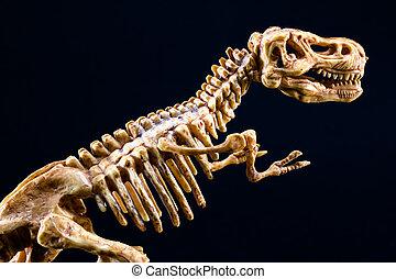 rex, skelet, dinosaurus, tyrannosaurus, black , t, achtergrond
