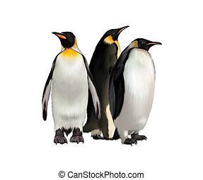 rey, pingüino emperador, pingüino de gentoo