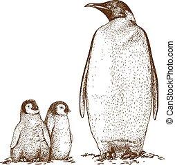 rey pingüinos, tres, ilustración