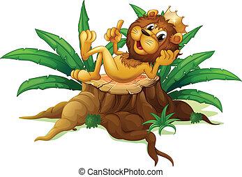 rey, tocón, selva