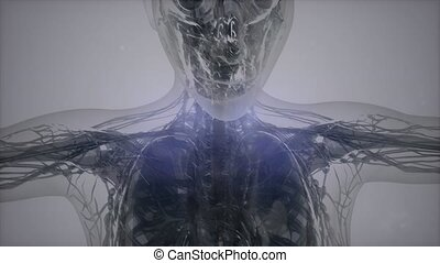 rezonans, magnetyczny, 3d, wizerunek, skandować