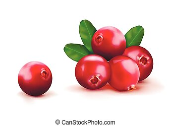 ???????? RGB - Ripe red cranberries with leaves. Vector...