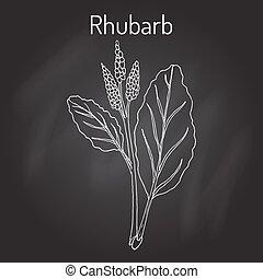 rhabarbarum, rhubarbe, rheum, culinaire, médicinal, plant.