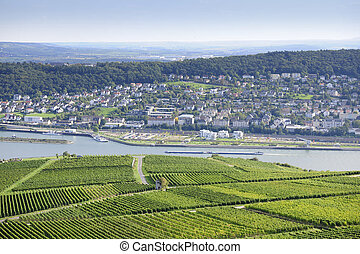 Rheingau Riesling Vineyards near the Niederwalddenkmal, ++ NOTE TO INSPECTOR: The image is filtered manually - not digitally with cokin sky filters