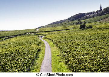 Rheingau Riesling Vineyards with some walking people near the Niederwalddenkmal