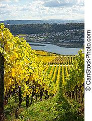Rhine valley with vineyards. Rudesheim, Germany