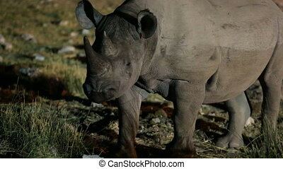 Rhino and tourists at night