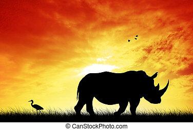 Rhino at sunset