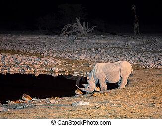 Rhino at waterhole