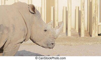 Rhino in the aviary.