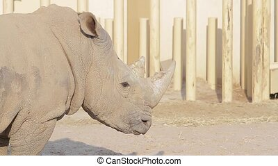 Rhino in the aviary.