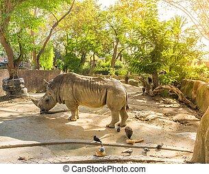 Rhino in zoo on sunny day