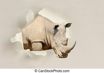 Rhino looking through a hole torn the paper - Rhino looking...