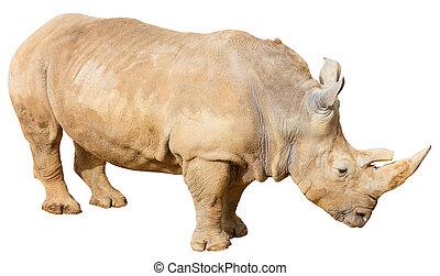 Rhino on a White Background