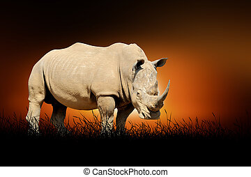 Rhino on the background of sunset