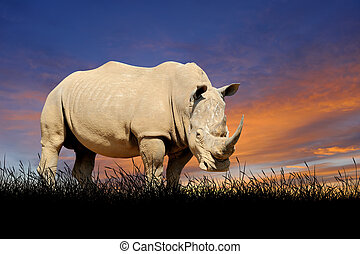 Rhino on the background of sunset sky