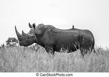 A beautiful White Rhino showing us a wonderful side profile. Majestic Creatures...
