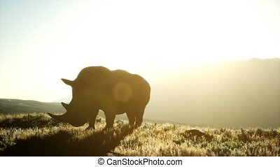 Rhino standing in open area during sunset