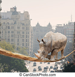 Rhino Walking On Rope, Outdoors