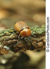 Beetle on wood