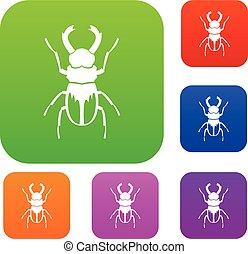 Rhinoceros beetle set collection