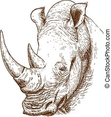 rhinoceros head - Vector engraving antique illustration of...
